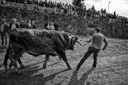 Na feira do gado - Chaves