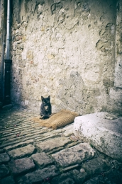 the Old Town Kitten