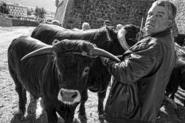 Concurso de gado - Santos - Chaves