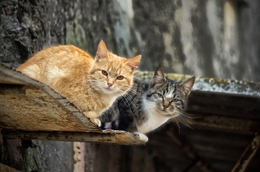 Cats on a don't Hot Tin Roof