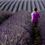 World of purple