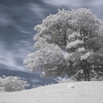 """Infrared photography"""