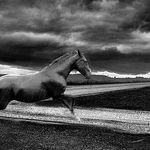 HORSE and RAIN