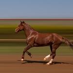 Brazilian Horse