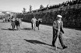 Na feira do gado