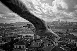 Gaivota - Porto