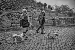 Passeando os cães